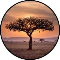 lone tree on african savanna